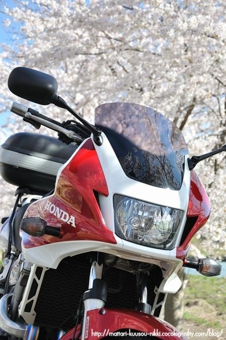 Sakura1_110417