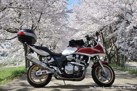 Sakura2_110417