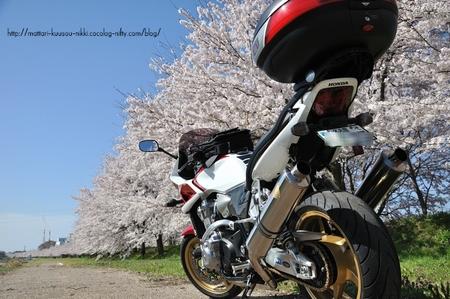 Sakura3_110417