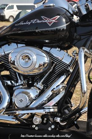 Harley6_111008